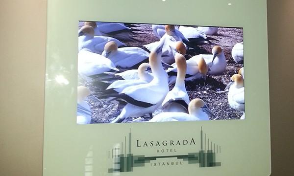 Lasagrada Otel Asansör Ekran ve Totem Uygulaması